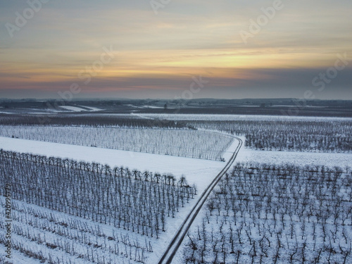 Fototapeta owocowy sad zimą obraz