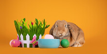 Cute Bunny Sitting Inbetween Easter Eggs, Grass Bucket And Food Bowl. Looking Towards Camera. Painted Easter Eggs Beside Basket. Isolated On Solid Yellow Background.