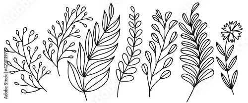 Canvas Print Hand drawn vector of doodle plants