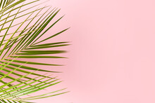 Palm Leaves Isolated On Pink Background With Copy Space.
