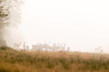 Red Deer Herd In The Snow, La Pampa, Argentina.