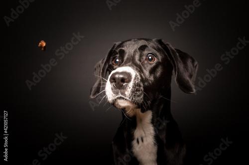 Hundefotografie Fototapet