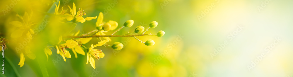 Fototapeta Nature of flower in garden using as background natural flora cover page or banner design