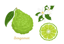Bergamot Set. Citrus Fruit Whole And Slice, Flowers And Green Leaves Isolated On White Background. Vector Illustration In Cartoon Flat Style.
