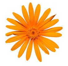 Orange Gerbera Flower Detail From Top On White