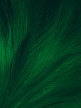 Beautiful Abstract Green Feathers On Black Background, Yellow Feather Texture On Dark Pattern,  Green Background, Feather Wallpaper, Love Theme, Valentines Day, Dark Texture