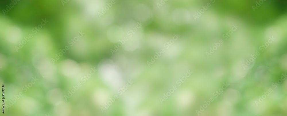 Fototapeta green grass texture