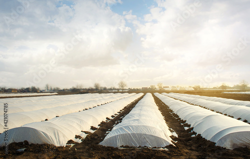 Canvas Agricultural fields covered with a protective coating against bad cold weather