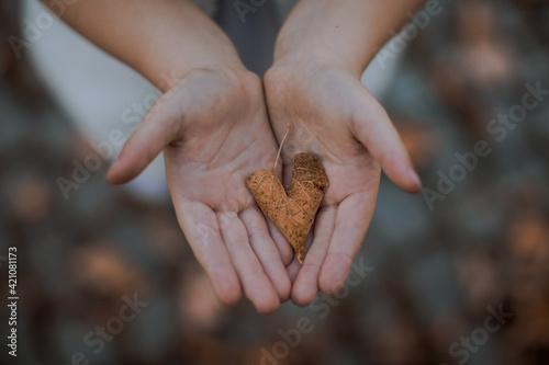 Fototapeta liść na dłońi  obraz