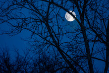 A Full Moon Looking Through An Elm Tree On A Winter Night