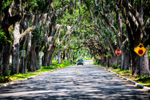 Famous Magnolia Avenue Street Road Shadows With Live Oak Trees Canopy And Hanging Spanish Moss In St. Augustine, Florida With Car On Summer Sunny Day