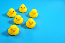 Yellow Rubber Ducks On A Blue Background Close-up. Copy Space