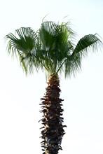 Beautiful Palm Tree Leaves Against Sky