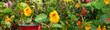 canvas print picture - Schmetterling 826