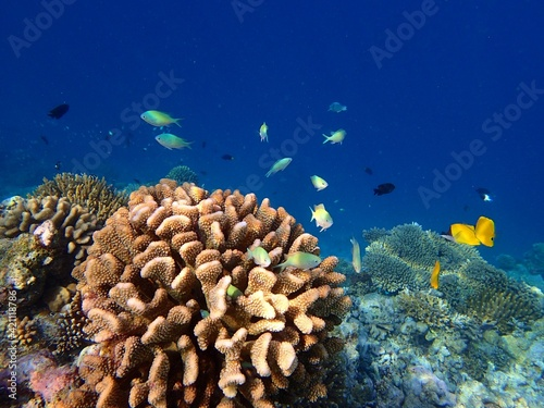 coral reef with fish Fotobehang