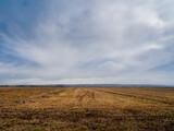 View over The Great Field, Braunton, North Devon, Flat rural landscape, England.