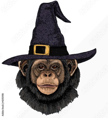 Vector chimpanzee portrait. Ape head, monkey face. Tapéta, Fotótapéta
