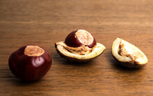 Buckeye Chestnut And Conker In Shell On Wood.