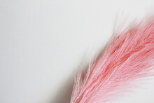 Pink Decorative Feather On A White Background