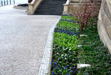 Bed Of Spring Flowers Biennials And Annuals Blue Red White Stripes And Beige Stone Wall Historic Buildings Bossage Pavement Granite Cubes