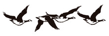 Flock Of Four Canada Geese, Branta Canadensis Flying In A Row, After An Antique Engraving