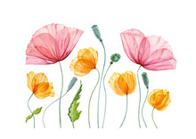 Watercolor Poppy Composition. Summer Field Flowers With Green Leaves. Floral Artwork With Big Red And Small Yellow Flowers. Realistic Botanical Illustration For Easter Design