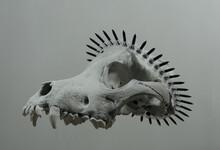 Wreath Of Black Screws On Animal Skull Side View