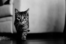 Portrait Of A Cat, Moving To Hunt Down Something