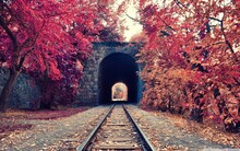 Railroad Tracks Amidst Trees In Tunnel