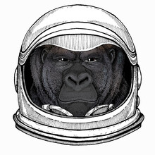 Gorilla Head. Vector Illustration. Wild Animal Portrait. Astronaut Animal. Vector Portrait. Cosmos And Spaceman. Space Illustration About Travel To The Moon. Funny Science Hand Drawn Illustration.