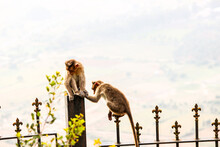 Monkey On A Plant Against The Sky