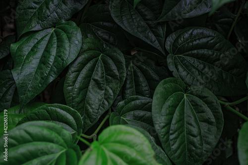 Fototapeta close up of green leaves obraz