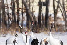 Flock Of Birds On Snow Covered Land