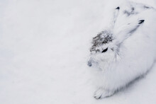 Close-up Of White Rabbit Over White Background