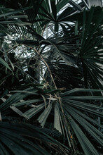 Full Frame Shot Of Palm Tree In Forest