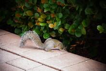 Squirrel Hiding Stock