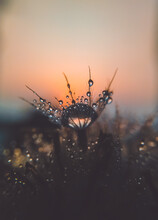 Close-up Of Dandelion Flower Against Sky During Sunset