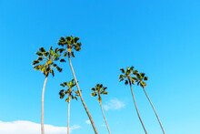 Low Angle View Of Coconut Palm Tree Against Blue Sky