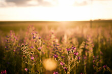 Purple Flowering Plants On Field Against Sky