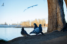Two Birds Perching On The Shore