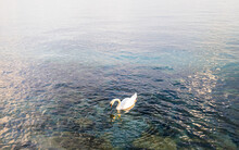 High Angle View Of Swan On Lake In Evening Light
