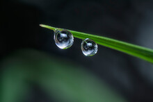 Beautiful Water Droplets On The Wild Grass Surface With Bokeh Background.