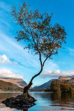 Llyn Padarn- Lone Tree