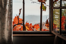 View Through A Window Of Idyllic Old Cabin, Fall, Autumn, Nature, Frame.