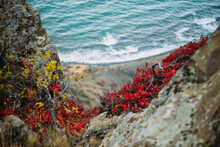 Autumn Plants On The Background Of The Sea.