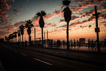 Silhouette Palm Trees By Street Against Sky During Sunset