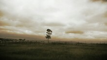 Lone Tree On Countryside Landscape