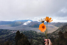 Hand Holding Flowering Plant Against Mountain