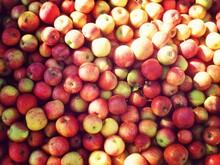 Full Frame Of Ripe Apples In Sunlight