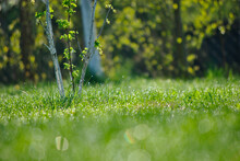 Close-up Of Grass Growing In Garden